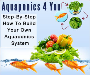 Plans For Aquaponics Systems